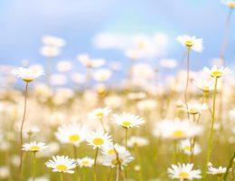 doencas-climaticas-em-funcao-da-primavera